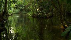 Rainforest / Stream / Amazonia | HD Stock Video 486-485-659 ...