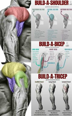 It is great to have well developed biceps, but make sure you don't forget to train the rest of your muscles in the upper and lower arm with the same volume and intensity as you do your biceps.Many beginners fall into that trap and create terrible imbalances in their arms. Even the great Arnold Schwarzenegger admits he trained his biceps harder and more often than his triceps in the beginning. This built an imbalance that took him years to balance back out.