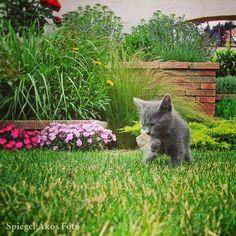 kerttervezés Cats, Animals, Gatos, Animales, Animaux, Animal, Cat, Animais, Kitty