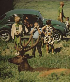 Tourists and deer in Yellowstone National Park, 1970s.