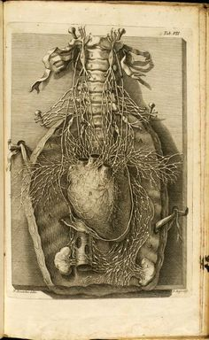 De motu cordis / 1728 Illustrated by- Ricciolini, Niccolo. Nerves of the thorax.