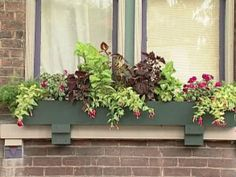 Planting Window Boxes for Shade | DIY Garden Projects | Vegetable Gardening, Raised Beds, Growing & Planting | DIY