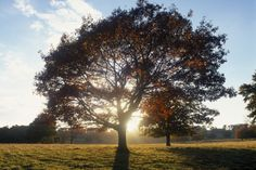 (PHOTO: © The National Trust Photolibrary / Alamy)  Britain's best autumn walks:   Petworth, West Sussex The Petworth House and Park ancient trees walk takes in a  beautiful deer park landscaped by 'Capability' was the inspiration for the great landscape painter, J.M.W. Turner. In autumn, the woodlands and grasslands transform slowly from green to gold. The magnificent oaks, limes, beeches and chestnuts create canopies of buttery-gold foliage and at the centre of the deer park stands...