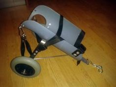 All About Animals, Animals Of The World, Animals And Pets, Diy Dog Wheelchair, Chihuahua Dogs, Puppies, Adaptive Sports, Dog Diapers, Guinea Pigs
