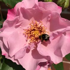 Get Bumble bee photos and images from Picfair. Find high-quality stock photos that you won't find anywhere else. Display Advertising, Print Advertising, Bee Photo, Rose Images, Royalty Free Images, Wall Art Prints, Stock Photos, Nature, Copyright Free Images