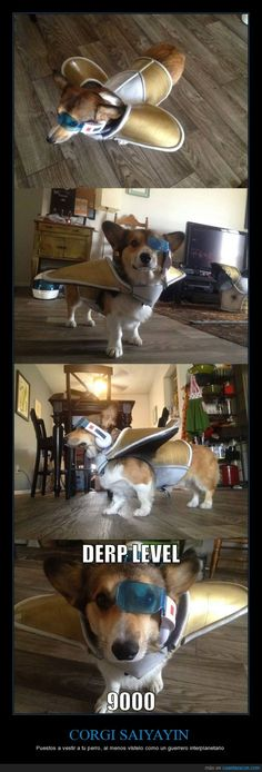CORGI SAIYAYIN - Puestos a vestir a tu perro, al menos vístelo como un guerrero interplanetario