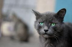 graue Katze, Outdoor | Download der kostenlosen Fotos