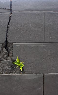 Fern growing in a concrete block wall Concrete Block Walls, Lilies Of The Field, Dame Nature, Bloom Where Youre Planted, Parcs, Creative Photography, Mother Nature, Wild Flowers, Beautiful Flowers
