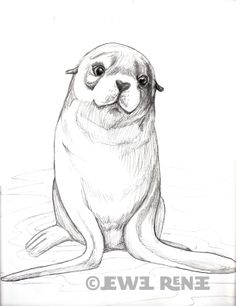 Jewel Renee Illustration: Fur Seal Pup Pencil Drawing