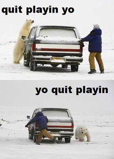 Why is this so funny? I honestly cannot stop laughing. hahahaha big ass polar bear! haha