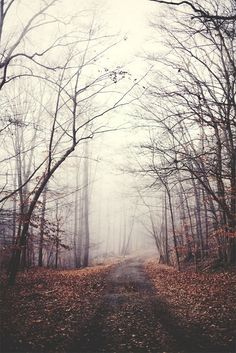 I found myself possessed by an insatiable desire to wander, my feet pressing forward despite my body's insistence that rest was required. That is how I found myself alone in the wood, pressed in by the copse of trees and heavy blanket of fog. That is how I found myself quite lost indeed...