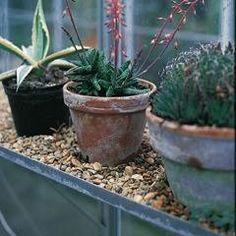 Via  Birds & Blooms Magazine  · 1/4/2014     .  Don't get the winter gardening blues! Plant a windowsill garden. .http://bit.ly/1dWIamV