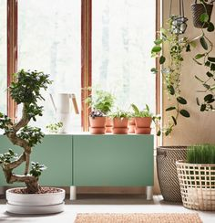 Your green corner at home - IKEA