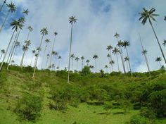 colombia and the calazancom the cocora valley colombia bewildering dr seuss of worldu
