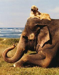 elephant and dog