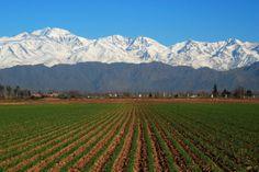 Viñedos en San Rafael, Mendoza.  (lbk)