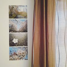 【shabondama2207】さんのInstagramをピンしています。 《I decided to recycle my last year's calendar and display some of my favourite pictures on the wall (the pictures were taken by me during my latest Japan trip)  #cherryblossom #sakura #homedecor #japan #kirsikankukka #sisustus #室内装飾 #桜 #さくら #日本》