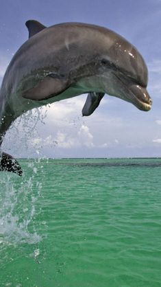 dolphin-jumping-ocean-animal