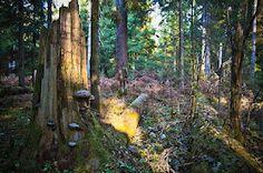 Primeval Białowieża Forest