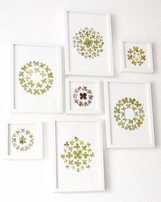 Dried And Pressed Flowers, Dry Flowers, Meadow Flowers, Patterned Furniture, Crochet Home Decor, Woodworking Toys, Leaf Art, Knitting For Kids, Flower Frame