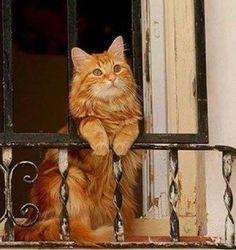 Un Chat à son Balcon