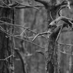 'Pine Twigs' on Picfair.com