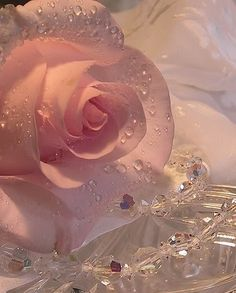 pink rose with dew drops and a shabby chic touch