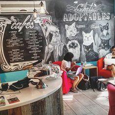 Café à chats - rue St Denis - Montréal - Crédit Jessica Prudencio