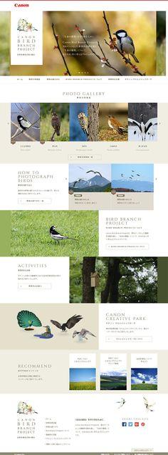CANON BIRD BRANCH PROJECT