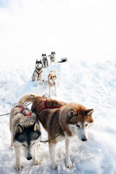 my own sled dog team...possibly.  not sure yet