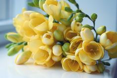 "Freesias: ""intensely refreshing and peppery flower with green nuance, synthetically recreated to give sheen and freshness to perfumes."" more at http://www.fragrantica.com/notes/Freesia-94.html"