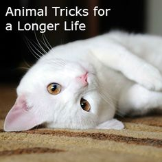 Lifespans of animals may hold secrets to a long life.