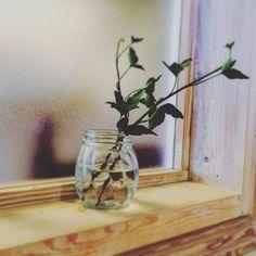#窓辺 #リメ缶 #寄せ植え  #ボタニカル#アプリ #多肉#多肉植物#多肉バカ同盟 # #観葉植物 #ガーデニング #グリーンインテリア #園芸 #花部 #フラワー #花のある暮らし  #succulents #cactus#gardening #containergarden #flowerstagram #florist #greenthumb #greenlife #plants#containergarden#botanical#お散歩 #お出かけ