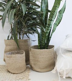SHOP NOW.. We just received a new delivery of fair trade baskets.. These 'Woven Pots' are the perfect accessory for your new plant! Starting at $29.95.. Shop Online & Instore now or [Shop Insta in Bio] T x by hopeandmay