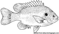 fish pictures to color for kids | fish coloring pages