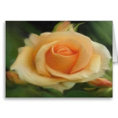Peach Colored Rose On Canvas Cards