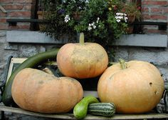 Confluences, Belgium. Old recipes and new flavours. 'Forgotten' vegetables such as orache, parsnips, amaranth, Jerusalem artichokes, cardoon and / or wild plants and berries, cereal tortillas, vegetable quiches, poultry from our own farm, etc http://www.organicholidays.co.uk/at/1958.htm