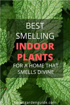 Learn about the best smelling houseplants to make your home smell amazing I've picked out a selection of my favorite fragrant indoor plants Learn more at smartgardenguide com is part of House plants indoor - Best Indoor Plants, Outdoor Plants, Garden Plants, Indoor House Plants, Best Indoor Trees, Flowering House Plants, Indoor Plants Low Light, Landscaping Plants, Plantas Indoor