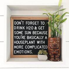 You are basically a houseplant. Yup.