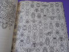 jardim secreto livro de colorir - Pesquisa Google