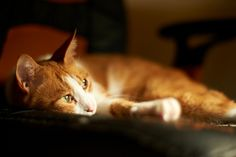 89cats:  . by rampx on Flickr.