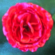 Crimson/Dark Fushia Ranunculus Flower on Velvet Rose's Pin Up Dressing Room - The vintage shop  #PinUpHairFlower #StockingStuffer Free Postage within Australiatailored to you