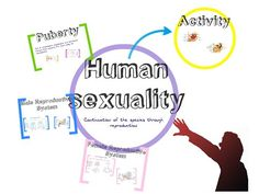 Zoom in, zoom out and learn all about Human Sexuality: Puberty, Primary and Secondary Sex Characteristics, Gonads, Gametes, Reproductive System...
