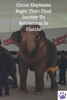 Circus Elephants Begin Their Final Journey To Retirement In Florida