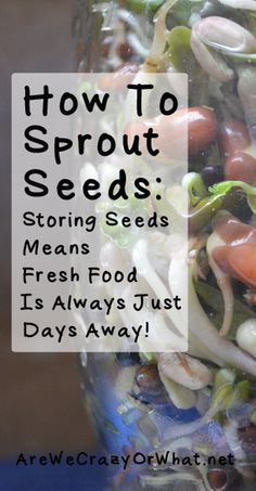 How To Sprout Seeds: Storing Seeds To Sprout Means Fresh Food Is Only Days Away! How to sprout seeds in Mason jars or in a sprouter. Step by step directions that will encourage you to add sprouts to your food storage. Permaculture Design, Organic Gardening, Gardening Tips, Indoor Gardening, Container Gardening, Growing Sprouts, Sprouting Seeds, Sprouting Grains, Grow Your Own Food
