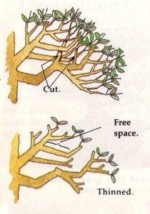 ramification bonsai - Recherche Google