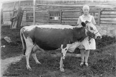 Finnish cow - Finland -Found on vanhakalvia. Dairy Cattle, Friesian, Four Legged, Ancient History, Old Photos, Animals And Pets, Norway, Cow, Old Things