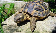 Reptiles, Terra, Animals, Animals And Pets, Photos, Turtle, Animaux, Animal, Animales