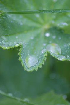Sardeaux: Sataa sataa ropisee...
