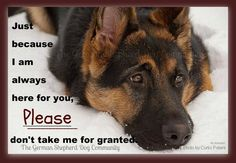 German Shepherd quote- such an adorable gsd
